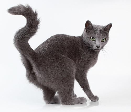 Как правильно выбрать котенка: Котёнок до 2-х-2,5 месяцев не должен...