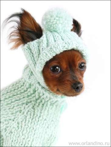 Как связать одежду для своей собаки