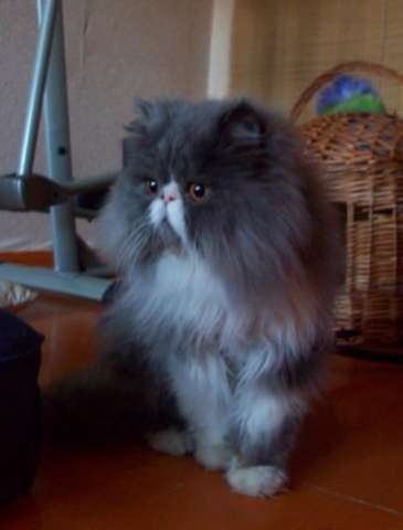 Экстремал фото кот