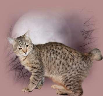 фото котят рыси