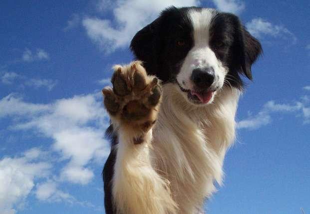 По собачьим законам: как не стать жертвой четвероногих
