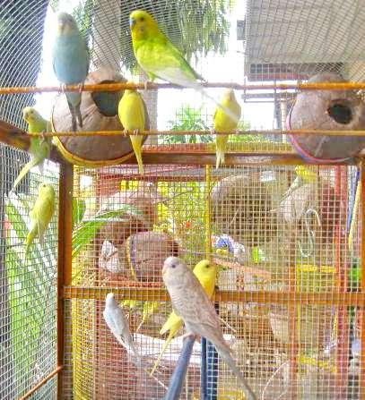 Домик для попугая корелла