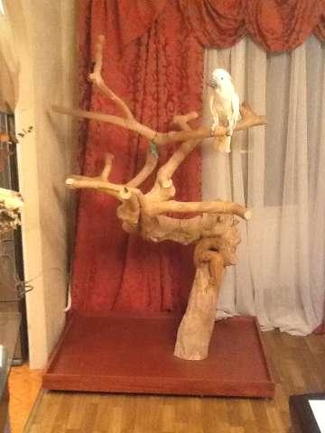 Дерево для попугаев своими руками 639