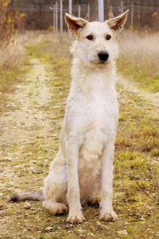 Собака мишка на севере глазки пуговки