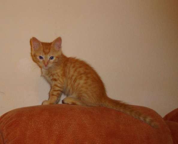 Котята в дар одинцово