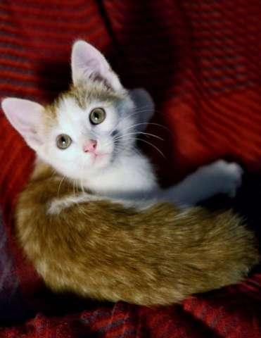 котята в дар тюмень фото