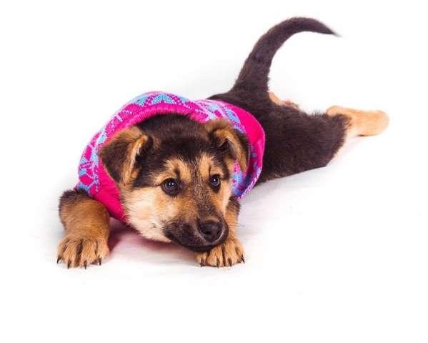 для активного собаки в дар в москве материал замечательно отводит