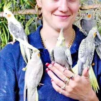 Кореллы - Нимфы . птенцы , взрослая птица. попугай способный к разговору и общению.