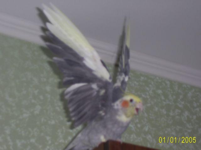 галереях: птицы подмосковья фото с названиями и птицы с хохолком фото.