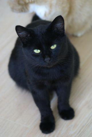 Чёрный кот спб