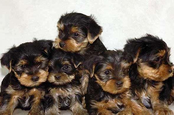 Золотая собака Клички знаменитых собак