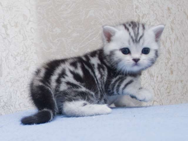 фото котят щенков